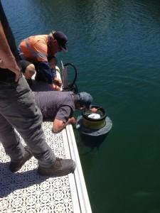 Shorewater final adjustment Seabin 2